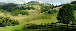 Mitrovo polje